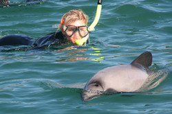DolphinSwimClose