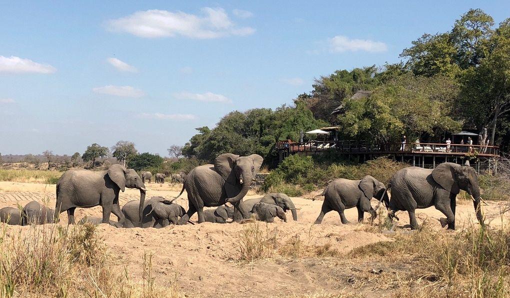 gallery-16-294-jock-safari-lodge-elephan