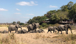gallery-16-294-jock-safari-lodge-elephan