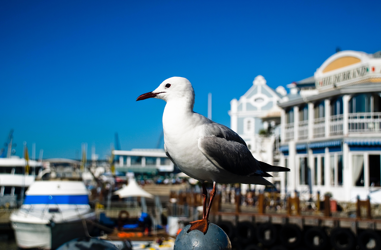 bird-blue-cape-town-493963