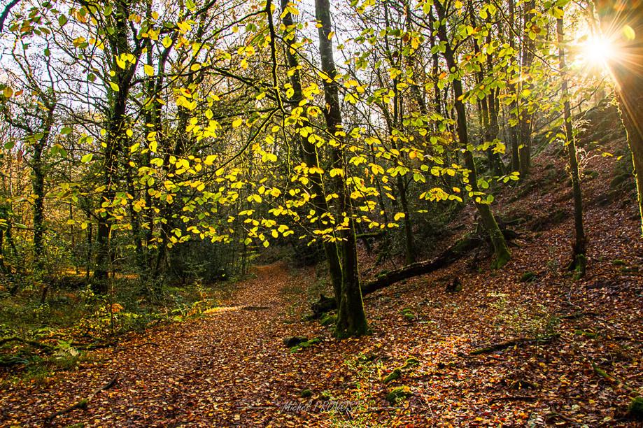 foret automne 1.jpg