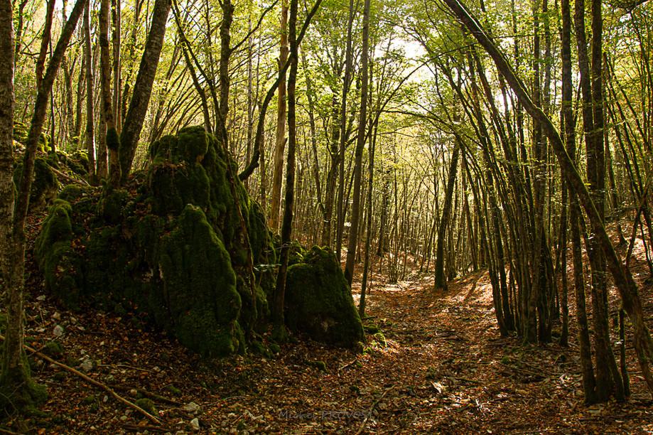 Forêt en Côtes d'or