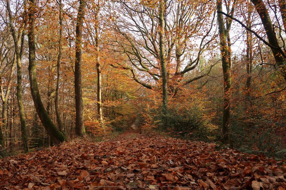 Foret Couleur d'automne-1.jpg
