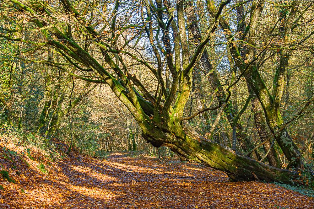 arbre_couché_Aff.jpg