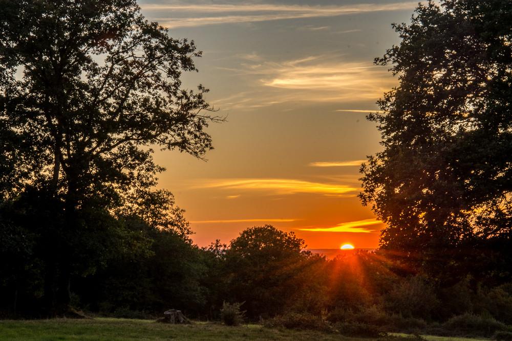 Foret coucher de soleil web.jpg