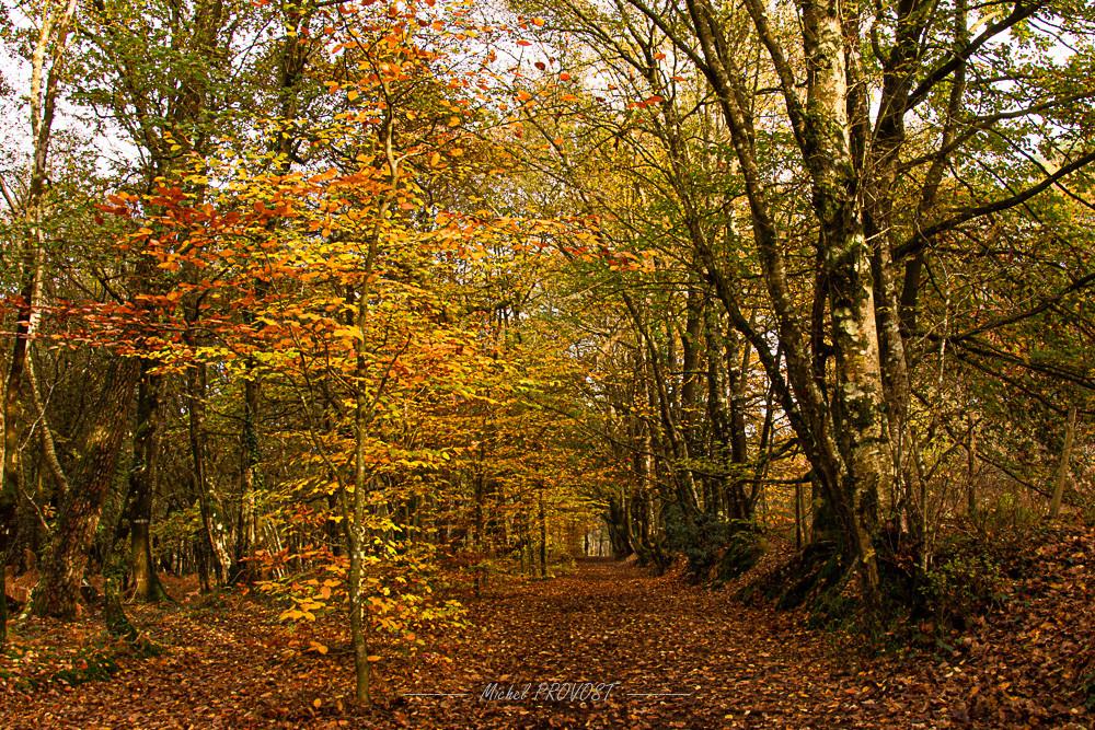 couleurs automne 1.jpg
