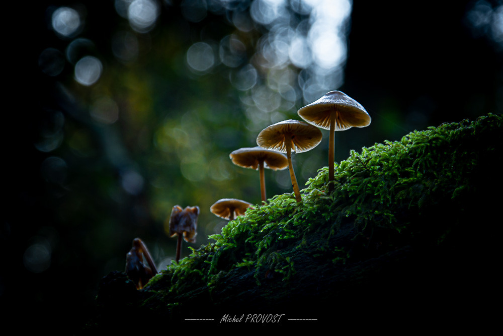 champignons sur branche.jpg