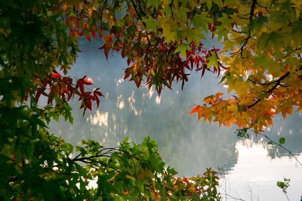 Foret Feuilles d'automne-1.jpg