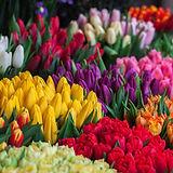 Seleção de flores