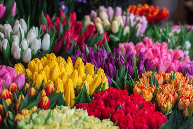 Selezione di fiori