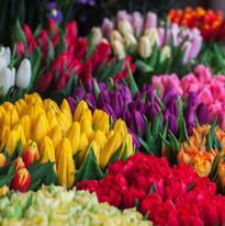 Çiçek seçimi