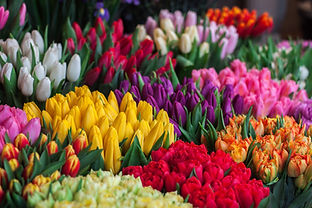 Selectie van bloemen