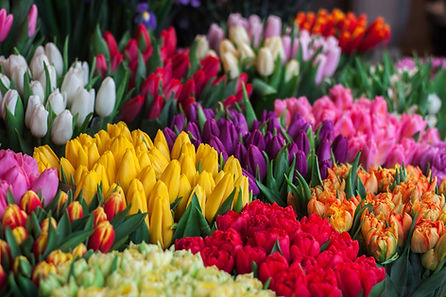 Dublin Flower Farm