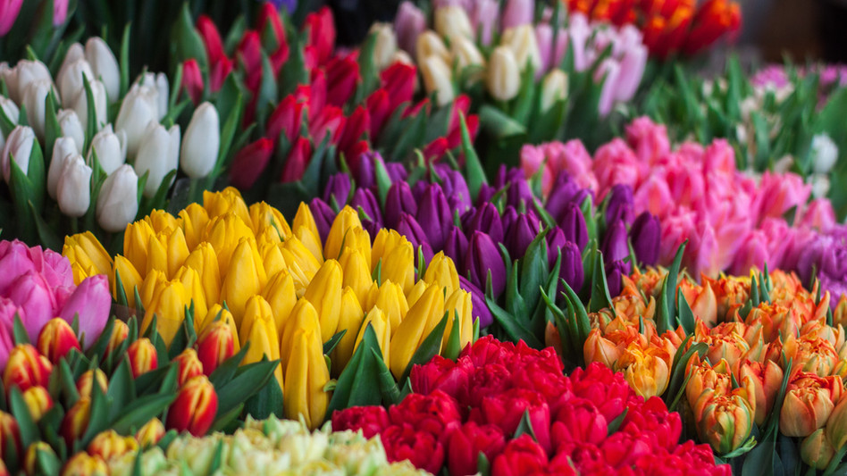 Tulips for every occasion!