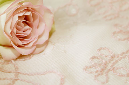 rose-2208460_1920.jpg