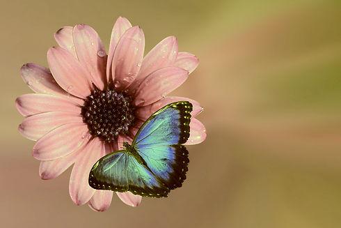 flower-2065967_1920.jpg