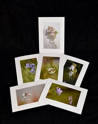 Cartes fleuries.jpg