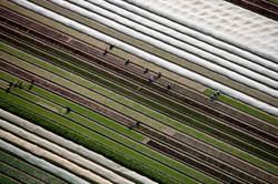 Crop Picking Hampshire