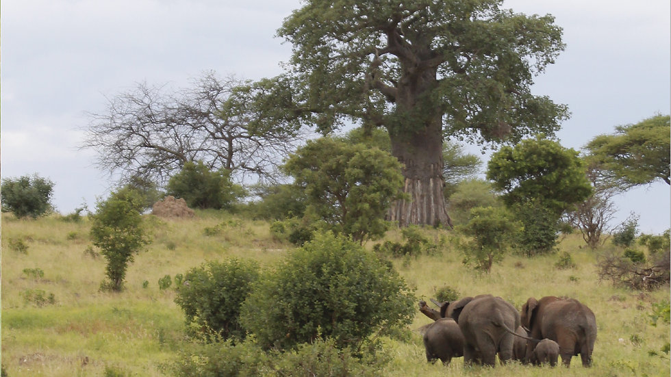 The Elephant in the Tree