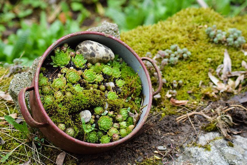 fond succulentes