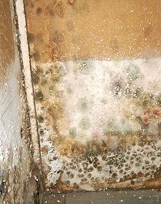 Mold Damage Sierra Vista, AZ