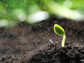 Herbbacto-VITAL - talajkondicionálás vegyszermentesen!
