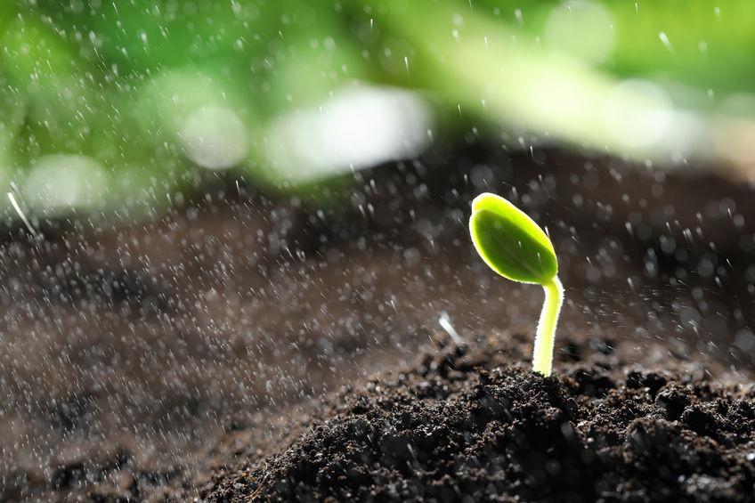 Herbbacto-VITAL növénykondicionáló