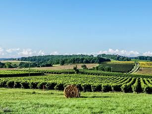 Les vignerons du Gers agissent pour vous