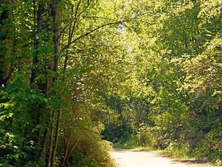 Wood Gundy fully sponsored Residency opportunity at Hidden Creek