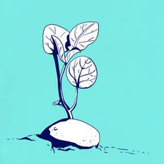Potato sprout