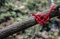 rope heart on branch