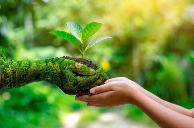 Medio ambiente, cuidado de la creación, laudato si, ecologismos, ecología