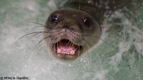 Seal-Teeth-GR