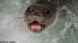 Seal-Teeth-GR