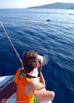 Photoidentification of dolphins
