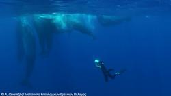 sperm-whales-GR
