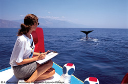 Studying-sperm-whales-GR