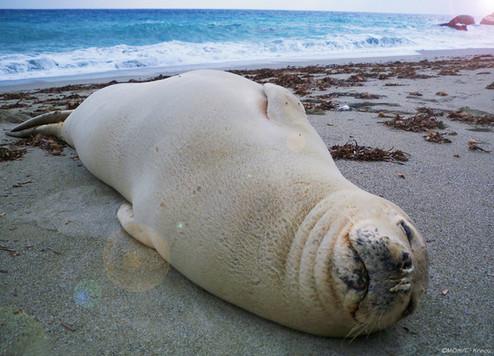 Beach seal enhanced.jpg