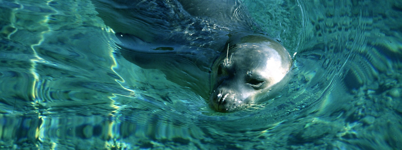 seal-1-GR1-1500x560