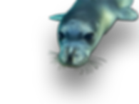 bannerseal.png