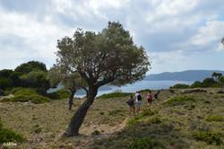 Hiking through Alonissos