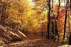 Fall o7 Wolf Mtn Lane a.jpg