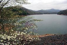Dogwood at the Dam a.jpg