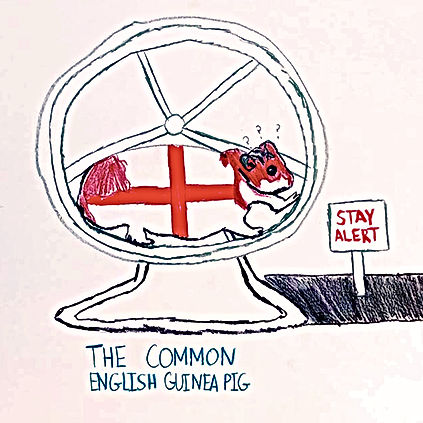 The Common English Guinea Pig.jpg