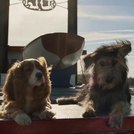 Disney выпустили первый трейлер новой версии «Леди и бродяги»