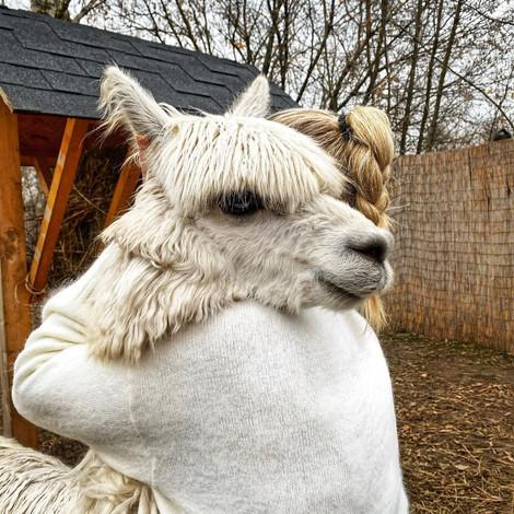 Афиша на 16—22 ноября: спасаемся от холодов в объятиях с альпака