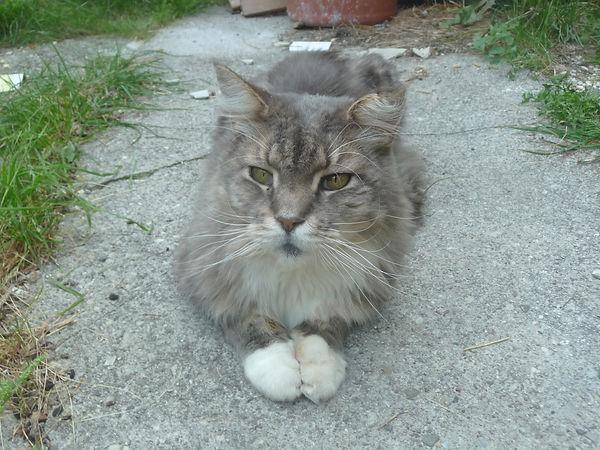 Katze001-Aug18-010.JPG