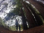 giant redwoods-LOW.jpg