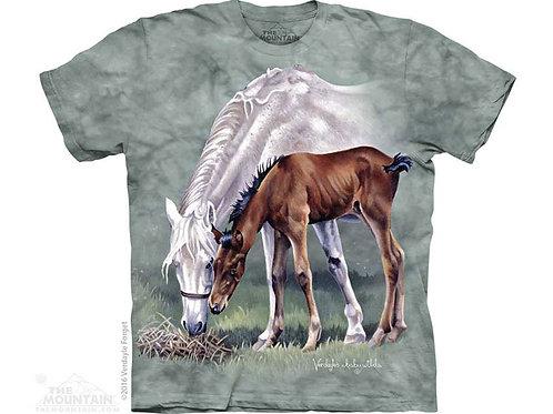 Pferde im Frühling