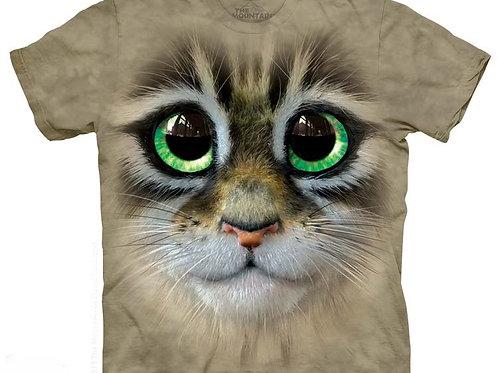 Grosse Augen Kätzchen